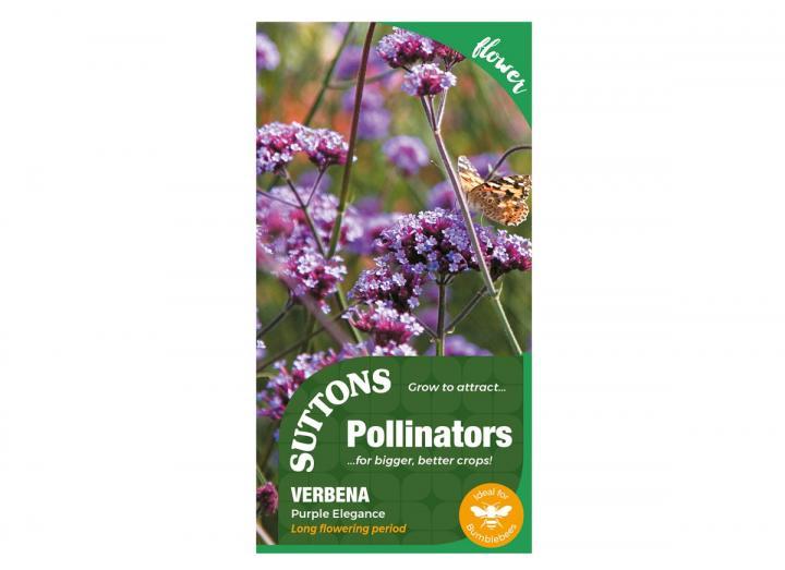 Verbena Purple Elegance seeds