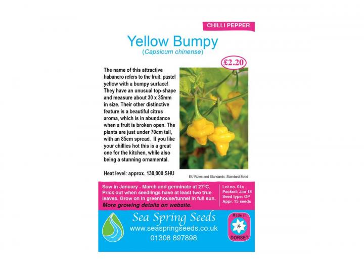 Yellow bumpy chilli seeds