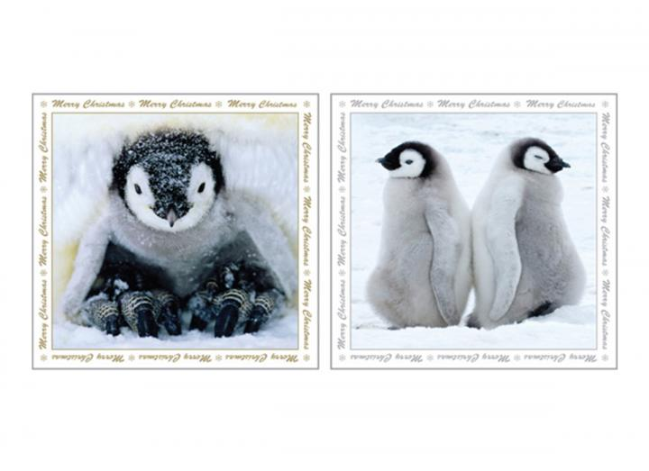Baby penguins card pack