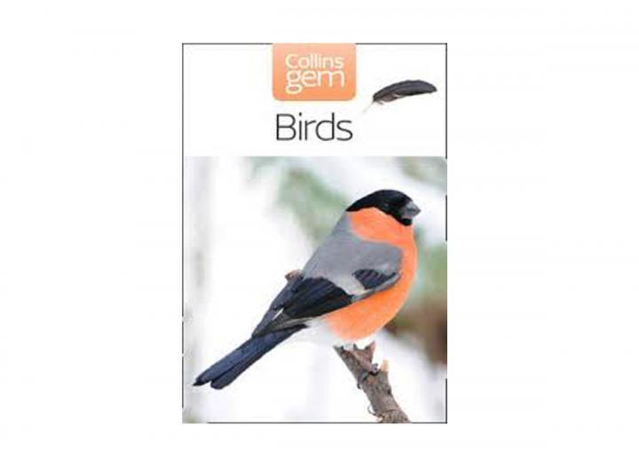 Collins gem birds