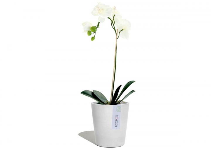 Orchid in a light grey plant pot