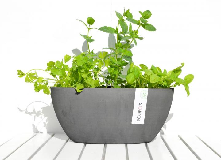 Grey herb plant pot