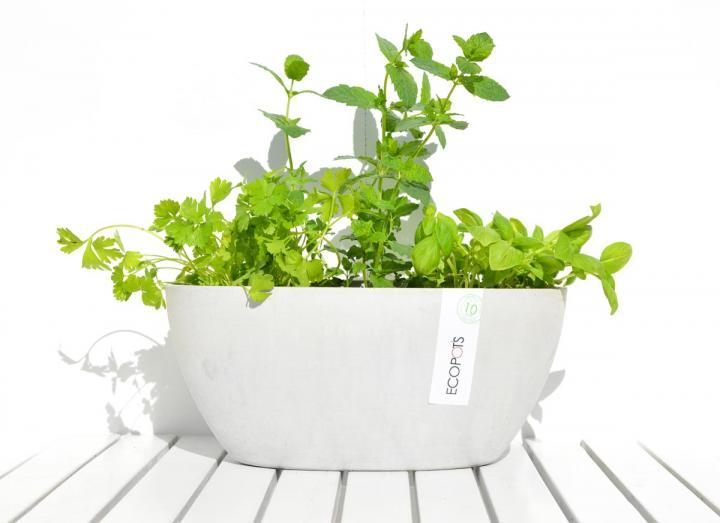 Light grey herb pot