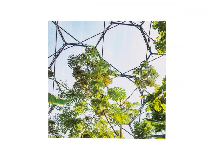 Eden African umbrella tree card