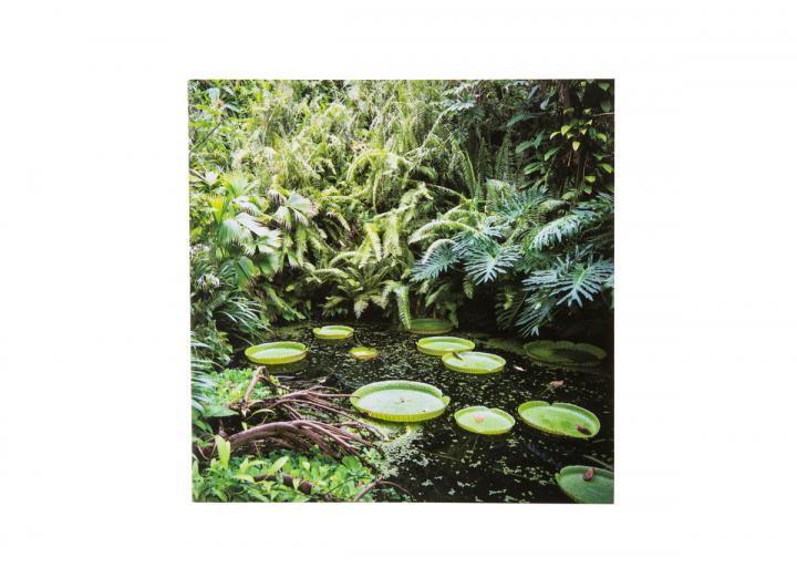 Eden Santa Cruz waterlily card
