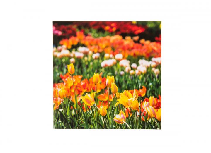 Eden tulips card