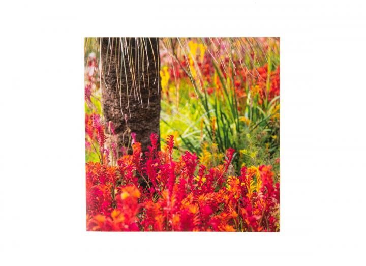 Eden Western Australia garden card