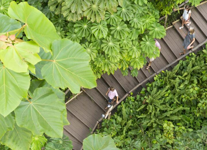 Aerial shot of family walking in Eden's Rainforest Biome
