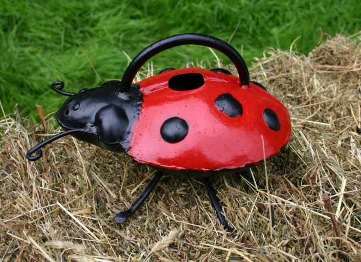 Ladybird watering can