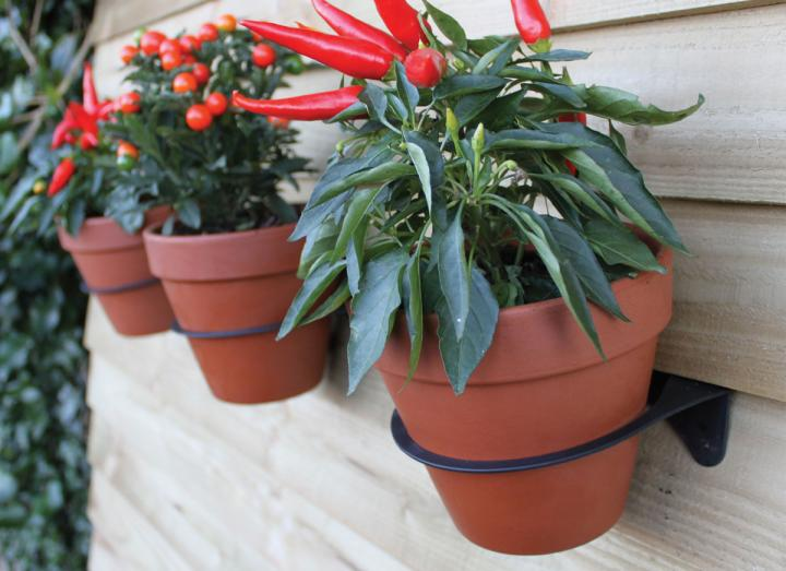 Plants pots attached to a wall with plant pot holders